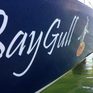 BayGull